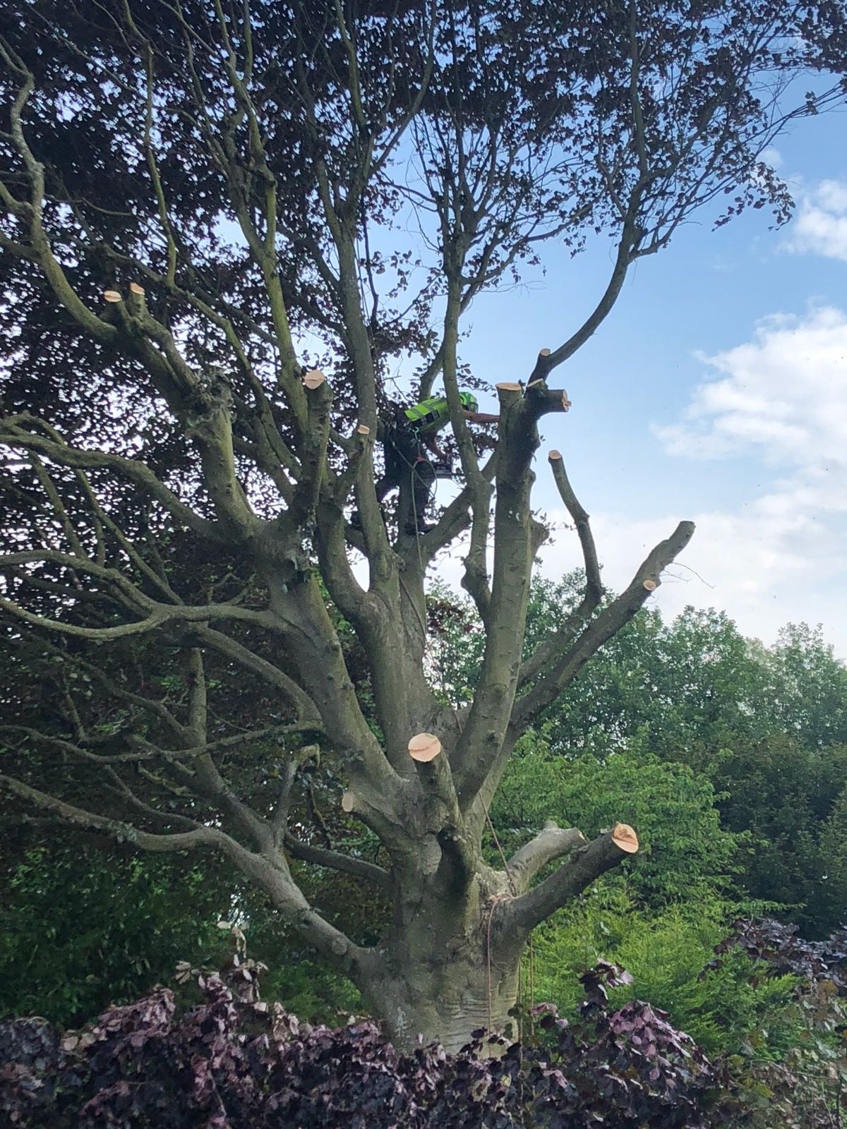 Tree surgeon in Kenley