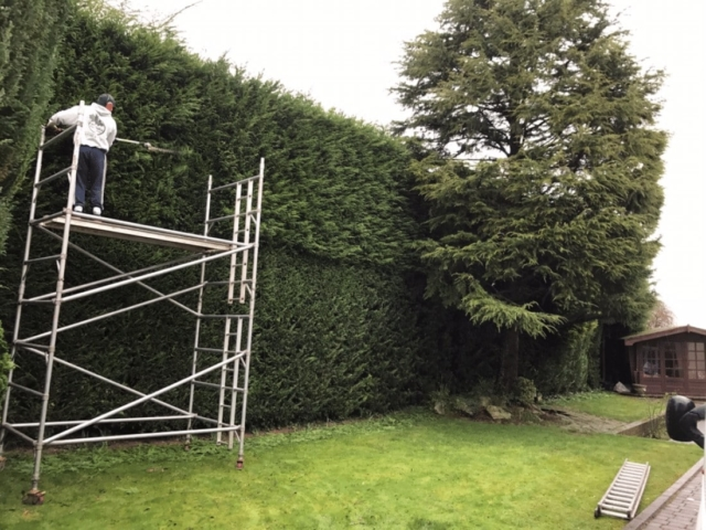 hedge-trimming-banstead