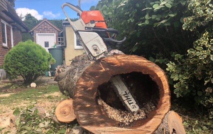 rotten tree 700x441 - Benefits of Tree Surgery Services for Your Garden