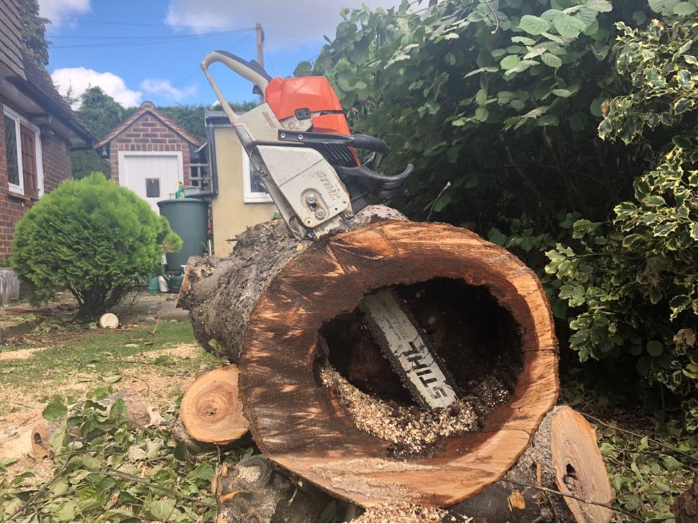 rotten tree - Benefits of Tree Surgery Services for Your Garden