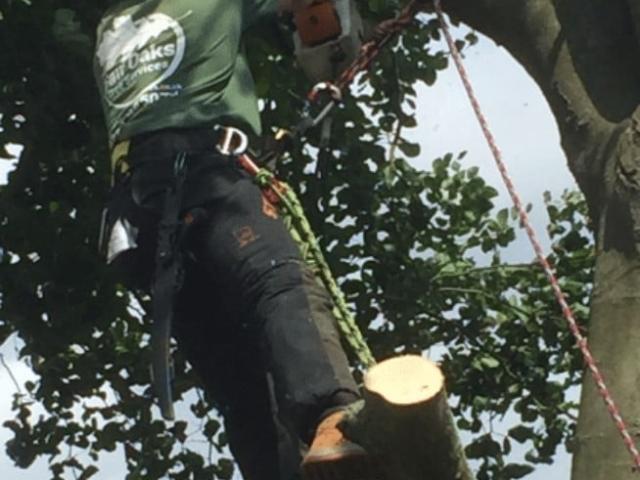 tree-cutting-surrey