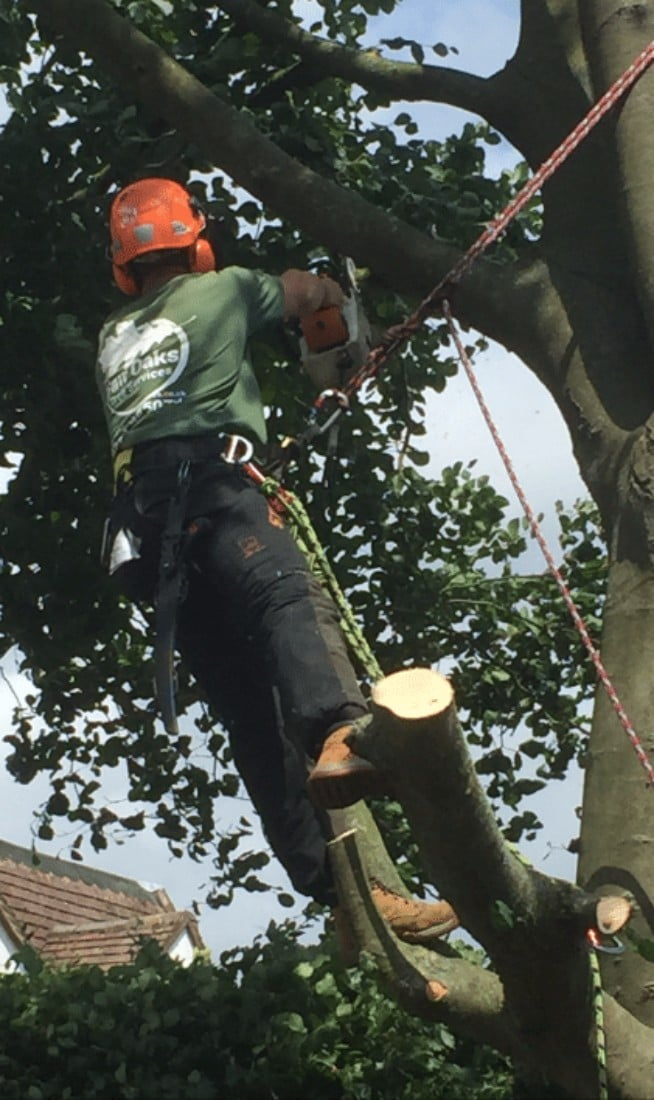 Tree surgery guides - signs your tree needs removing by a professional