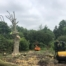 tree felling esher3 66x66 - Large copper beech tree removal in Esher, Surrey.