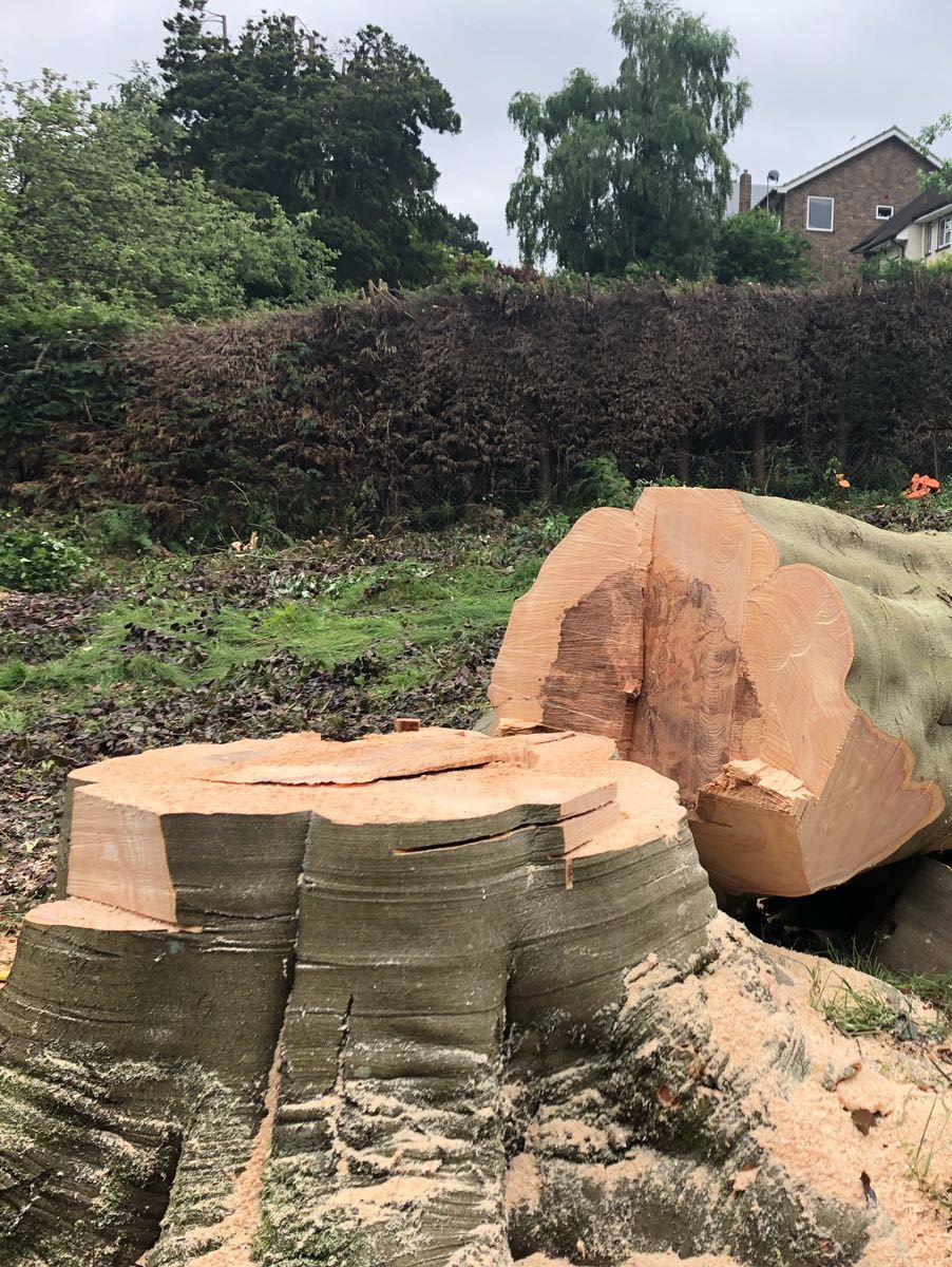 tree-felling-surrey