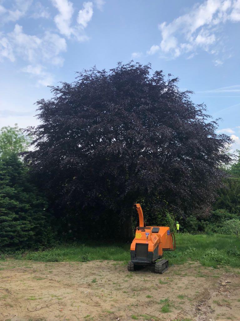 tree felling1 - Tree Felling