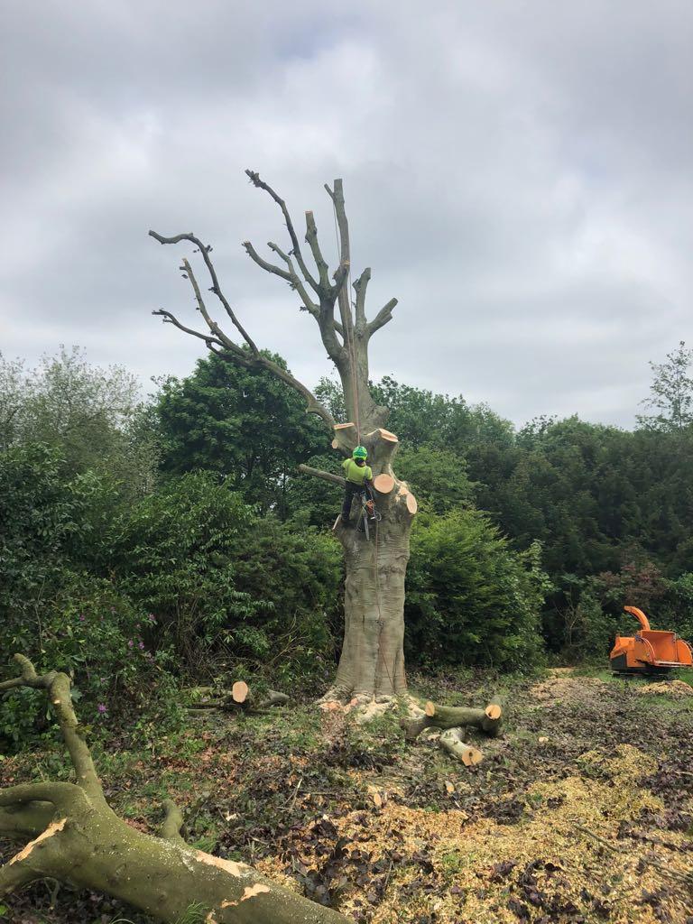 tree felling3 - Tree Felling