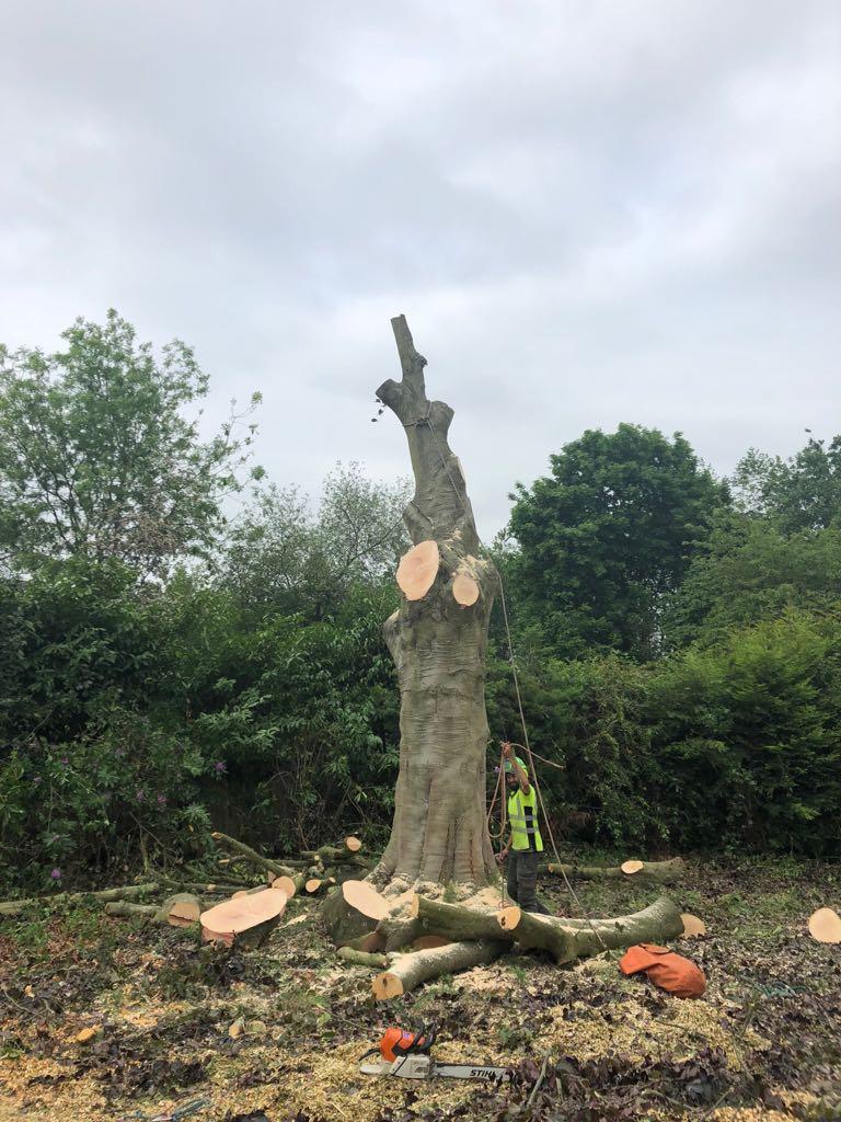 tree felling4 - Tree Felling
