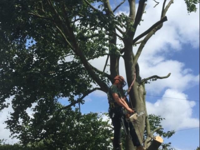 tree-pruning-cheam