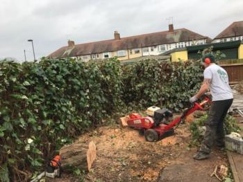 tree stump removal 350x263 - Tree Care