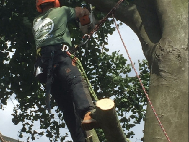 tree-surgeon-in-action