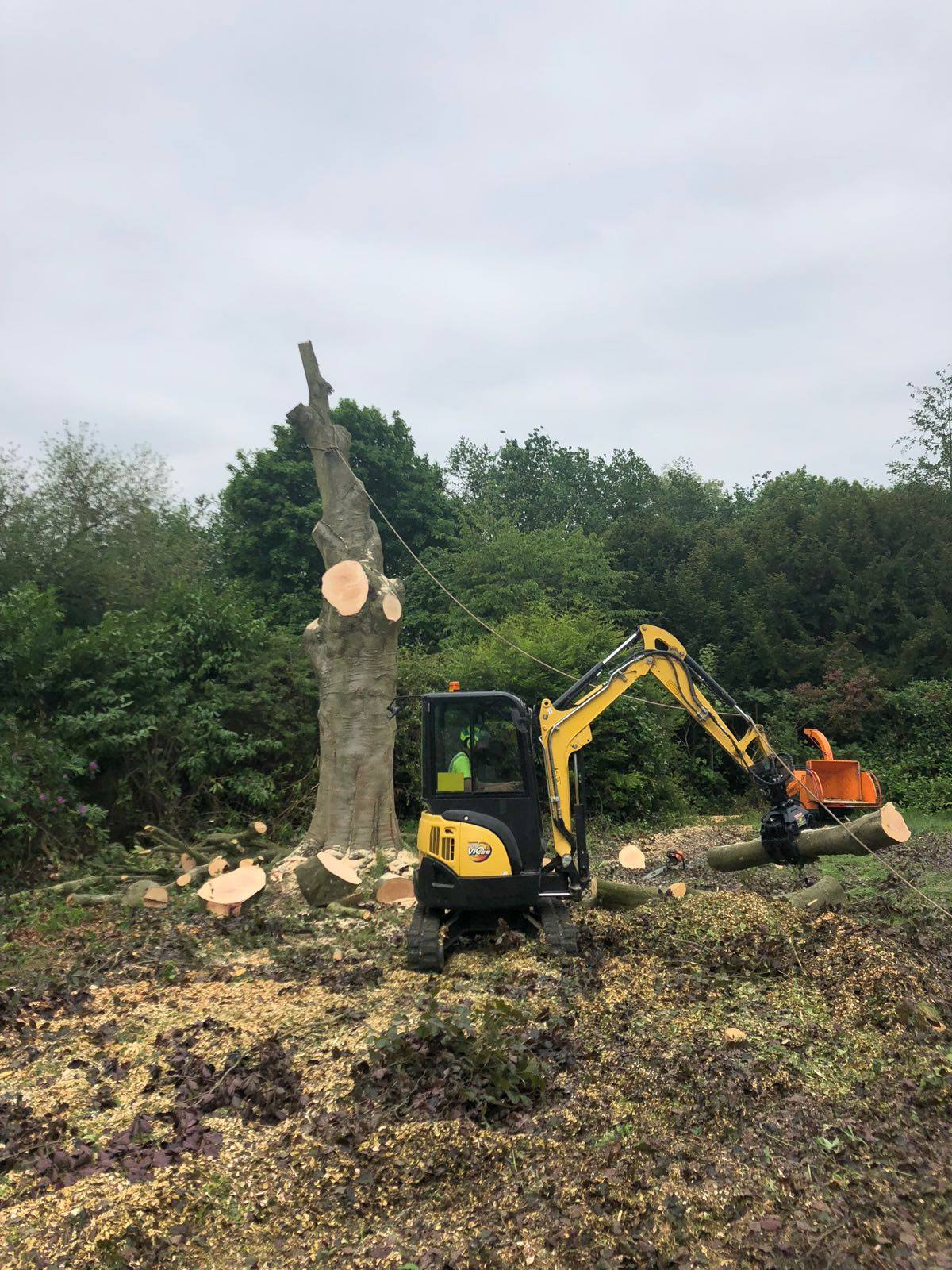 Tree Work - Purley