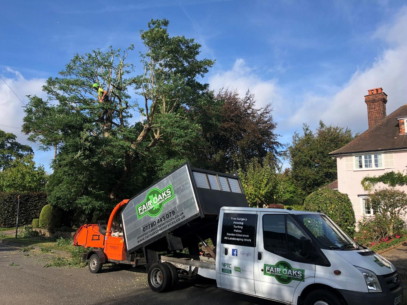 Tree company in Ewell
