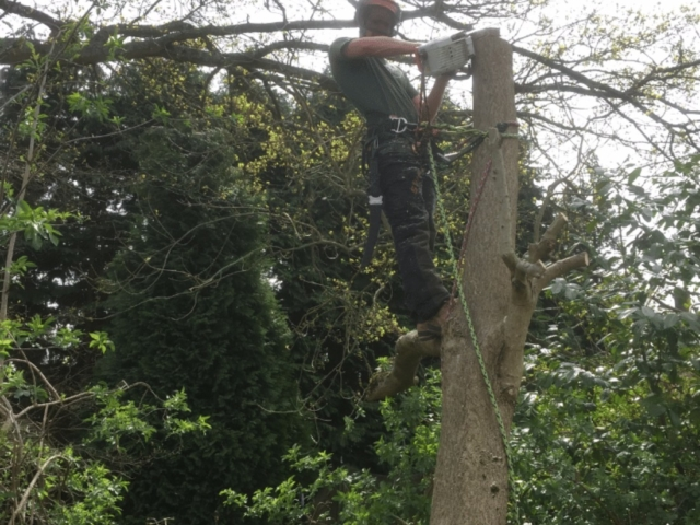 tree-surgery-carshalton
