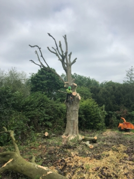 Beware the dangers of DIY tree surgery. Understand the risks of tree felling, stump removal & crown reductions. Always use a professional tree surgeon. Get free advice from experienced tree surgeons in London & Surrey.