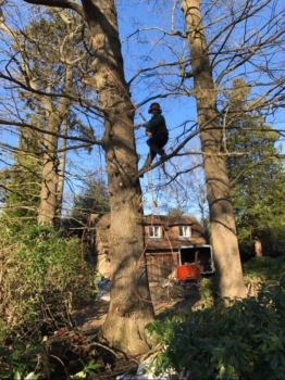 Tree care expert guides - Why you should NEVER perform DIY tree surgery