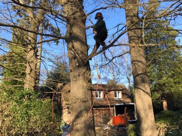 tree-surgery-tadworth