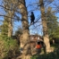 tree surgery tadworth 66x66 - Beware of the Dangers of DIY Tree Surgery