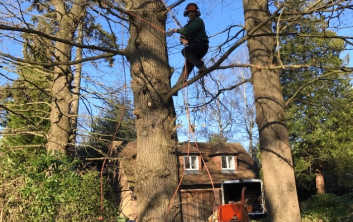 tree surgery tadworth 700x441 - Beware of the Dangers of DIY Tree Surgery