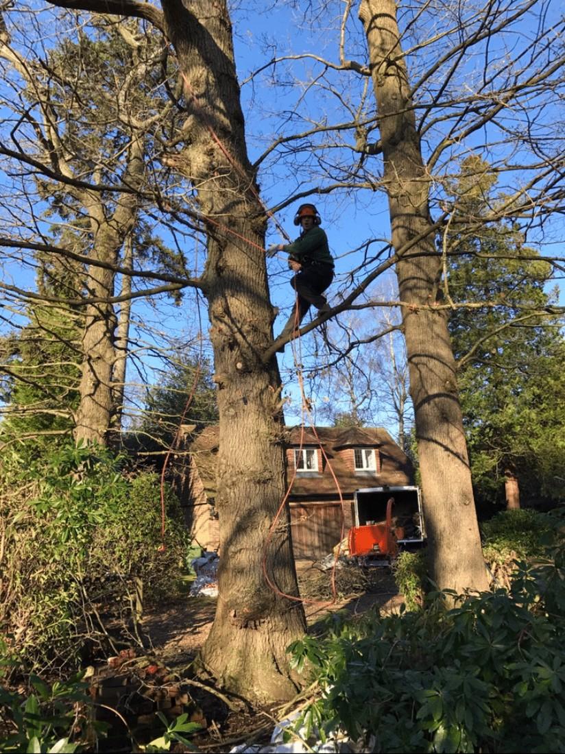 tree surgery tadworth - Beware of the Dangers of DIY Tree Surgery