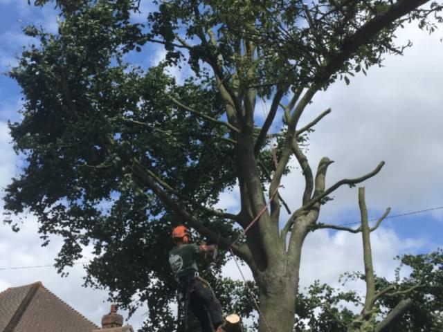 tree-take-down